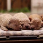 初心者必見!子犬選びで最低限みてほしい3つのポイント!!