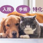 動物医療保険って現在14社あります!!どこが良いの!?
