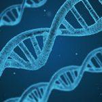 遺伝子検査トイプードルとしての検査できる3項目
